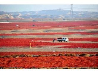 新疆阿拉尔市圈定富硒土壤近500平方公里 年增农业产值过百亿