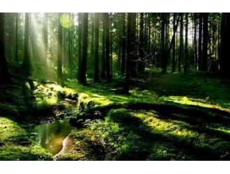 刘志光:生态环保是链动传统产业高质量发展的新动能