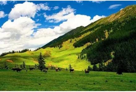 国家能源集团生态建设还绿贺兰山